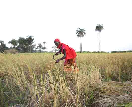 femme-dans-les-rizières