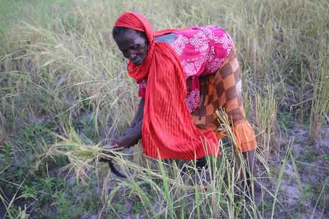 riz-la-coupe-femme